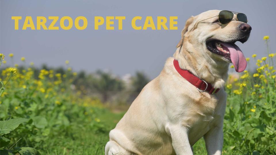 Tarzoo Pet Care