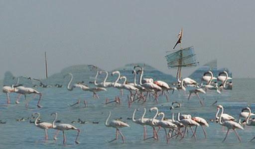 Birds at Ansupa lake