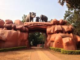 Chandaka Forest