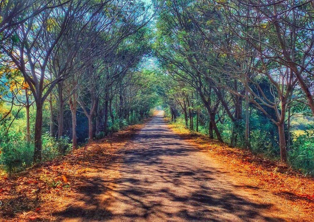 Deojhar Road