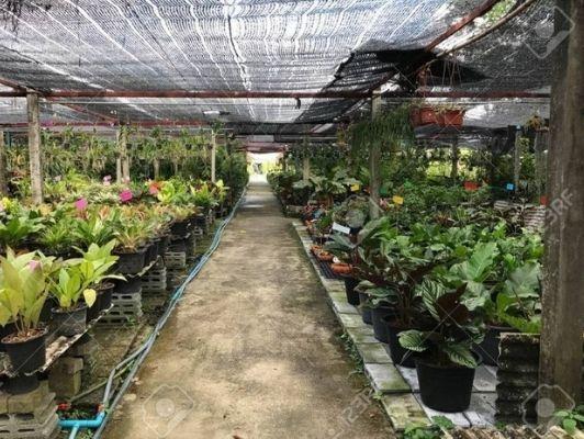 Siraj Nursery