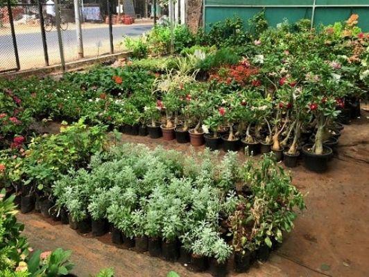Utkal Seeds Nursery