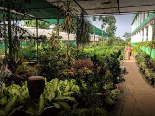 Nursery garden city