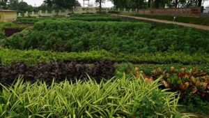 7 Best Nursery In Bhubaneswar – Gardening  a Solution  for  less Pollution
