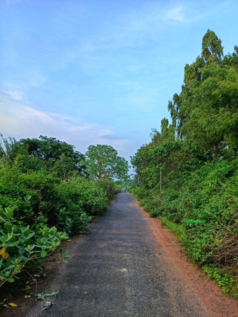 A lush green narrow road at Naraj