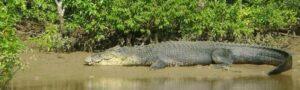Bhitarkanika-The Home of the Wild in Odisha