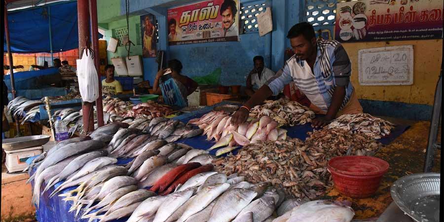 daily fish market