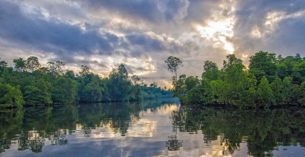 The Wild kingdom in the mangroves at Bhitarkanika