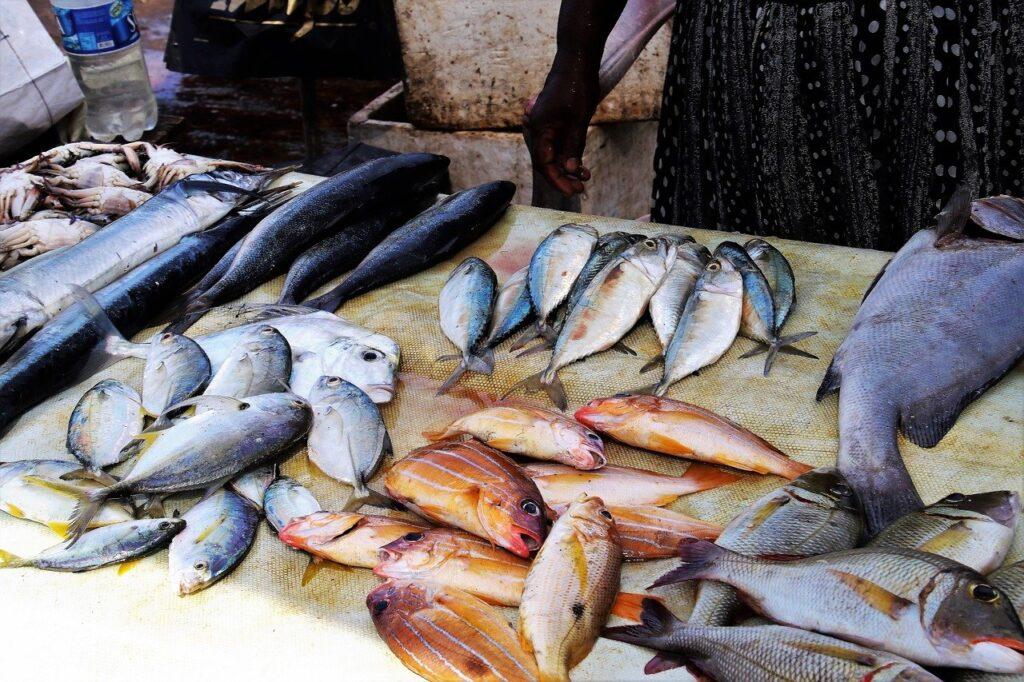 fish market kiit square